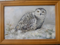 \'\'Sowa śnieżna\'\'  25x34 cm ,olej,płótno,autor Jolanta Kempa-Małecka