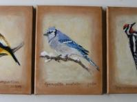 Ptaki ,24x18 cm ,olej ,płótno ,autor Jola Kempa-Małecka