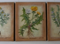 Zioła ,olej ,płótno,24x18 cm ,autor J.Kempa-Małecka