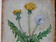Mniszek 24x18 cm,obraz olejny, płótno,w kolekcji prywatnej