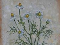 Rumianek 24x18 cm,obraz olejny, płótno,w kolekcji prywatnej