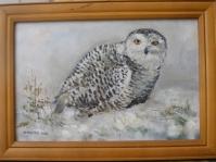 ''Sowa śnieżna'' 25x34 cm ,olej,płótno,autor Jolanta Kempa-Małecka